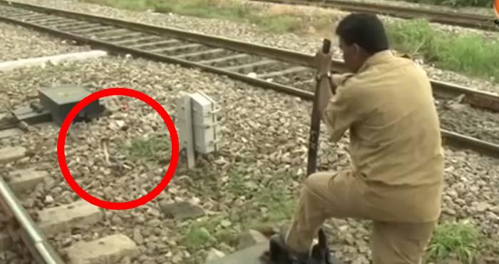 वीडियो: कोबरा भी नहीं हिला सका इनका जज्बा, T कुमारन ने टाला बड़ा हादसा