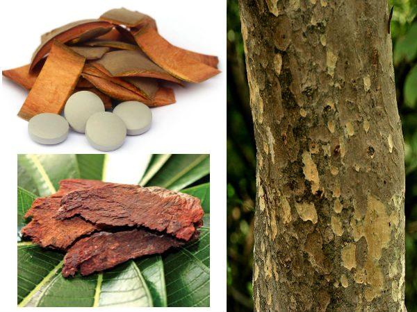 xarjun-tree-07-1465289715-08-1465362240