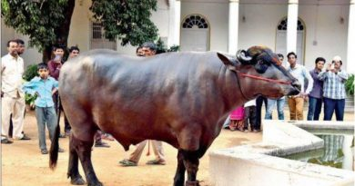 worlds most expensive buffalo