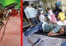 दिल्ली में अब तक चिकनगुनिया से 5 की मौत, सरकार कराएगी जांच
