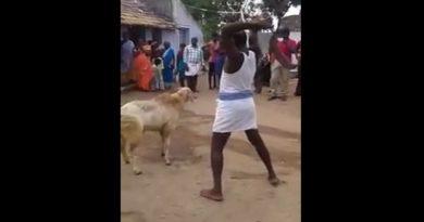 man tries to kill a goat