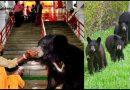 इस मंदिर में माँ की पूजा करने के लिए पुरे परिवार सहित जंगल से आते हैं भालू!