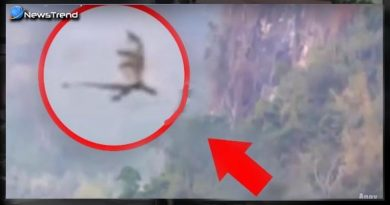 dragon flying china hills
