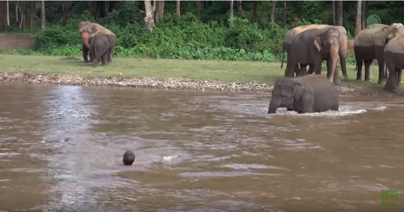 Video: Elephant rescue man, watch this interesting video of real life.
