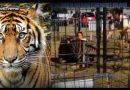 वीडियो वायरल : टाइगर खींचकर महिला ट्रेनर को ले गया अपने पिंजरे में, देखें फिर आगे क्या हुआ?