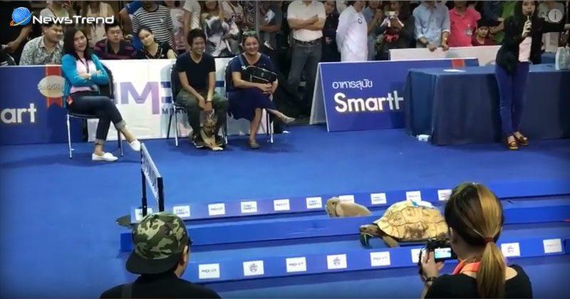 rabbit vs turtle