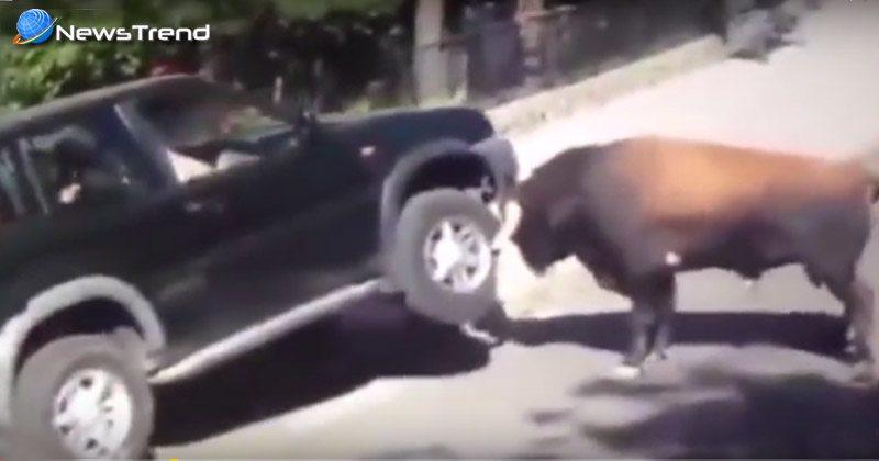 bull attack car