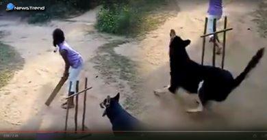 dog wicket keeper in cricket