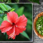 गुड़हल का फूल सिर्फ चढ़ाने के ही नहीं कई औषधीय गुणों से भरा होता  है, जाने उसके 5 चमत्कारी लाभों के बारे में!