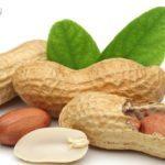 जानिए ठंढ में मूंगफली खाने से कौन- कौन से फायदे होते हैं…अगर आप नहीं खाते तो आज से शुरू कर दीजिये!