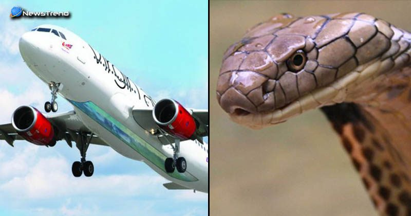 snakes in aeroplane