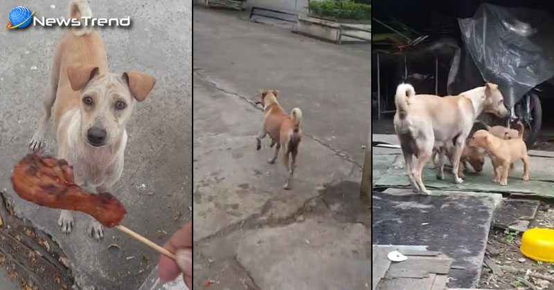 Mama Dog Begs