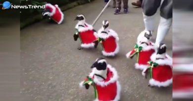 penguins dressed as santa clausv