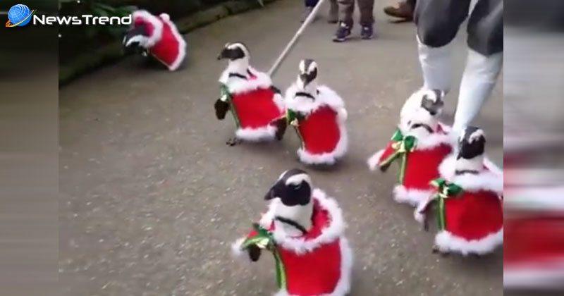 Photo of इंसानों ही नहीं पक्षियों पर भी चढ़ा क्रिशमस का रंग, यकीन ना आये तो देखें वीडियो!