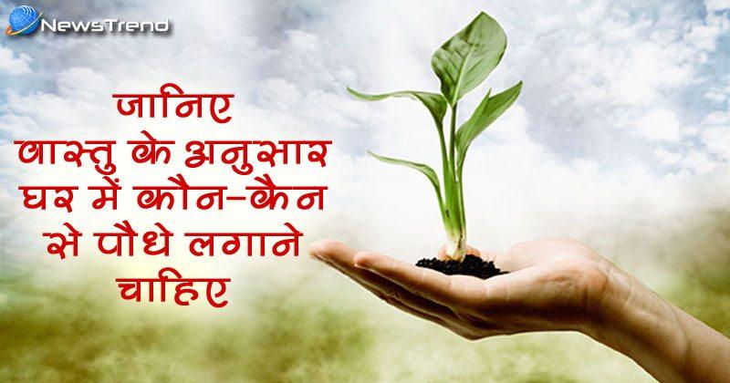 Photo of जानिए वास्तु के अनुसार घर में कौन-कौन से पौधे लगाने से आती है सुख-शांति!