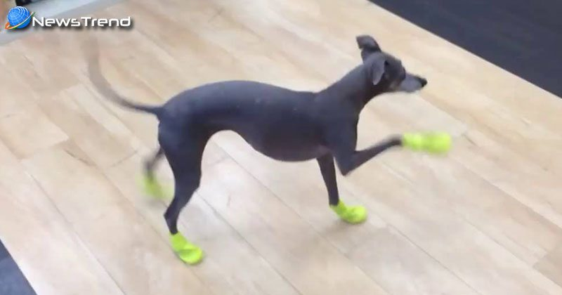 dog walks new snow boots