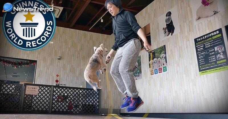 dog rope jump