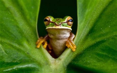 Frog shocked lord sri ram