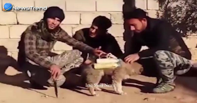 Photo of ISIS पार कर रहा हैवानियत की हद, अब कुत्तों को बना रहा सुसाइड बमर…. वीडियो वायरल!