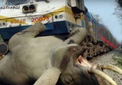 फुल स्पीड में आ रही ट्रेन से टकराया हाथी, हो गया भयानक हादसा! – देखें वीडियो