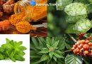 सावधान! सुख समृद्धि वाले पौधे भी पहुंचा सकते हैं आपको नुकसान, जानिये कहाँ हो रही है आप से ग़लती!