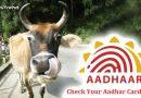 अब गायों का भी होगा आधार नंबर, सरकार ने सुप्रीम कोर्ट से की सिफारिश!
