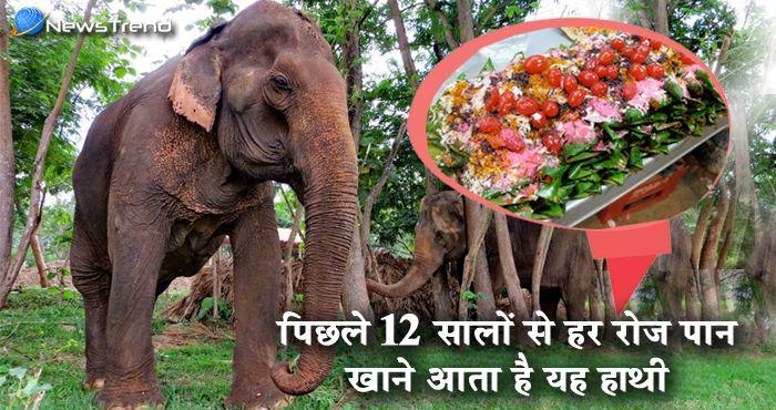 पिछले 12 सालों से हर रोज पान खाने बाजार आता है यह हाथी, देखकर हो जायेंगे दंग!