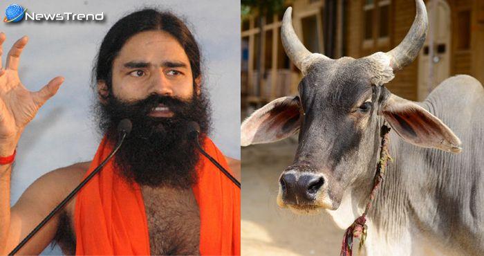 गजब : 'बैल' से 'बिजली' बनाएंगे बाबा रामदेव! जानिए कैसे?