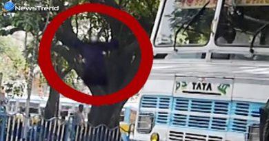 देखिये किस तरह रोड़ से उड़कर पेड़ पर चढ़ी आत्मा हो गयी कुछ देर में गायब, वीडियो कर देगा हैरान!