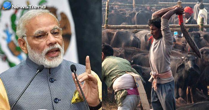 गौ रक्षा – मोदी सरकार के इस कदम से अब पूरे देश में नहीं हो सकेगी गाय और मवेशियों की हत्या