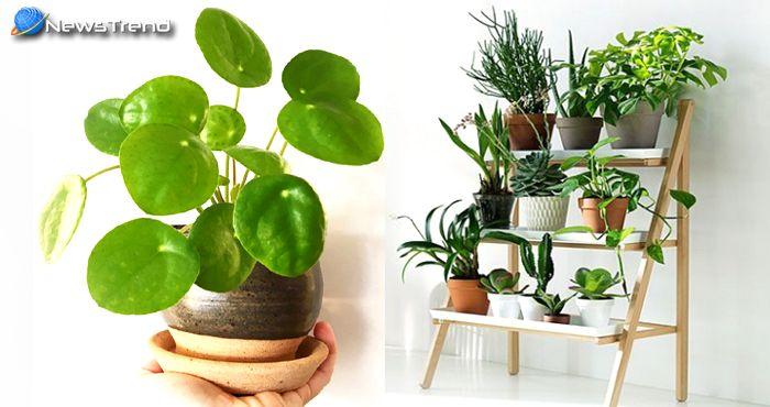 घर में मनी प्लांट लगाते समय रखें इन बातों का ध्यान, money plant.