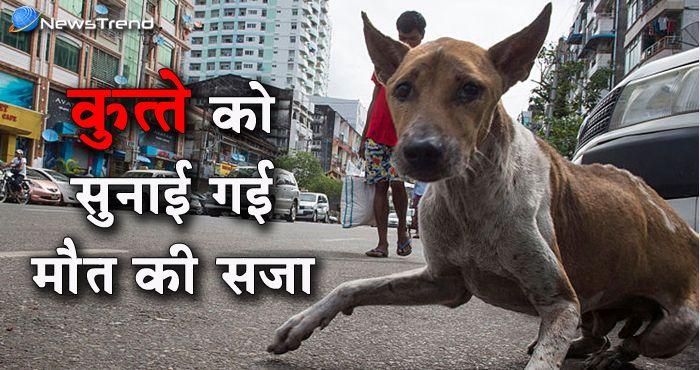 पाकिस्तान खो चुका है अपना मानसिक संतुलन, कुत्ते को सुनाई मौत की सजा!