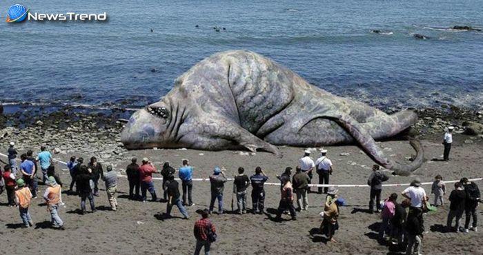 समुद्र किनारे मरा मिला 50 फीट लम्बा अजीबोगरीब जीव, देखकर उड़े लोगों के होश…. देखें वीडियो!