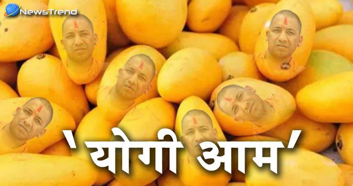 अगर आप भी हैं योगी के प्रशंसक तो इन गर्मियों लीजिये 'योगी आम' का आनंद!