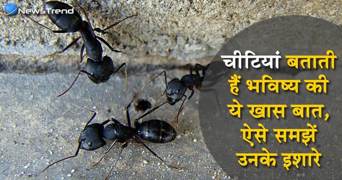 जानिये किस तरह से चीटियों के इशारे बताती हैं भविष्य के बारे में यह महत्पूर्ण बातें!