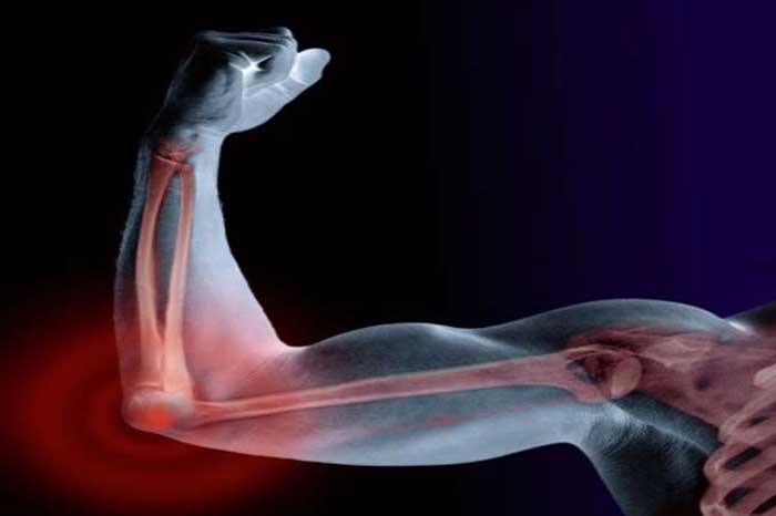 Image result for हड्डियां होती है मजबूत