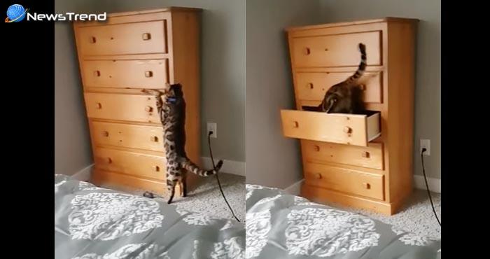 आखिर क्यों इस बिल्ली ने खुद को बंद कर लिया दराज में, जानकर हो जायेंगे आप हैरान... देखें वीडियो!