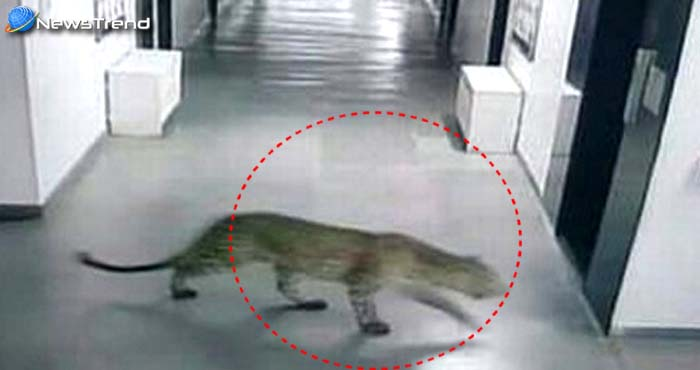 मुंबई के गर्ल्स हॉस्टल में तेंदुए ने घुसकर मचाया आतंक, कुत्ते को बनाना चाहा शिकार...देखें वीडियो