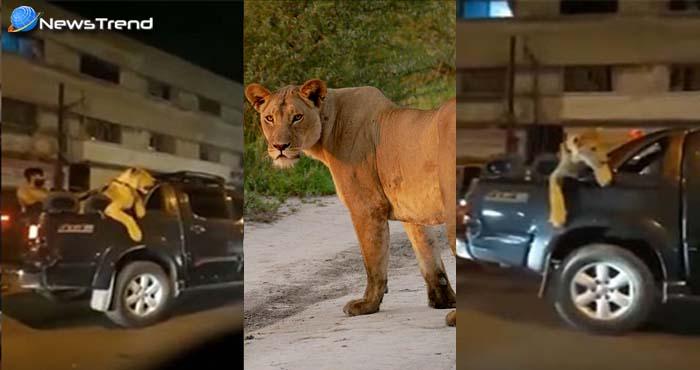 शेरनी लेकर पहुँच गया करांची की सड़कों पर, उसके बाद जो हुआ उड़ा देगा आपके होश.. देखें वीडियो!