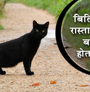 बिल्ली का रास्ता काटना हर किसी के लिए नहीं होता अशुभ, ये बातें देती हैं बेहद शुभ संकेत!