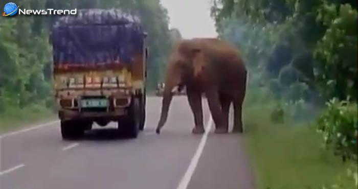 हाथी की दादागिरी देखकर हो जायेंगे दंग, ट्रक रोककर मिटाई अपनी भूख... देखें वीडियो!