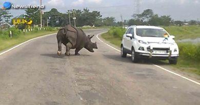 ...जब बीच सड़क गाड़ियों के पीछे पड़ा गैंडा, फिर मच गया हाहाकार – देखें वीडियो