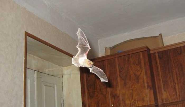 चमगादड़ के अशुभ लक्षण | Chamgadar | चमगादड़ का घर में आना मौत का संकेत.