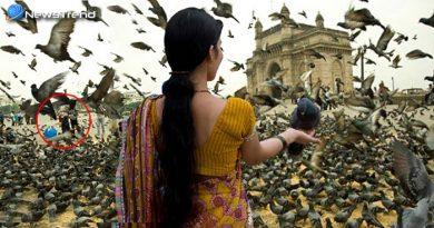 पक्षियों को डालते हैं दाना? तो न करें ये गलती, वर्ना हो सकता है भारी नुकसान
