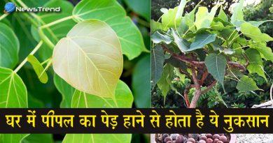 आखिर क्यों नहीं उगना चाहिए घर में पीपल का पौधा, जानें