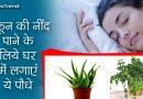 अच्छी नींद चाहते हैं तो ये पौधें अपने घर लाए, महक उठेगी आपके जीवन की बगियाँ