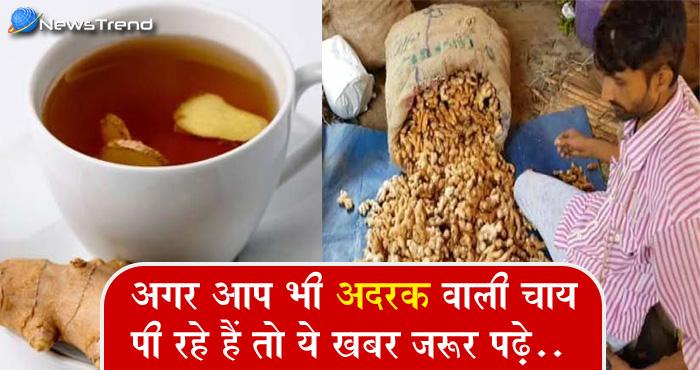 अदरक वाली चाय के शौकीन हैं ! हो जाएं सावधान... चाय नही तेजाब पी रहे हैं आप