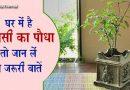 केवल फायदा ही नहीं तुलसी का पौधा पहुँचा सकता है आपको नुकसान भी, जानें इससे जुड़ी कुछ ख़ास बातें