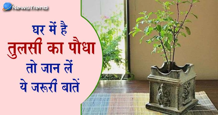 केवल फायदा ही नहीं तुलसी का पौधा पहुँचा सकता है आपको नुकसान भी, जानें इससे जुड़ी कुछ महत्वपूर्ण बातें