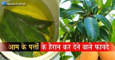 बहुत फ़ायदेमंद है आम का पत्ता! कर सकता है कई गंभीर बीमारियों का खात्मा, जानिए कैसे